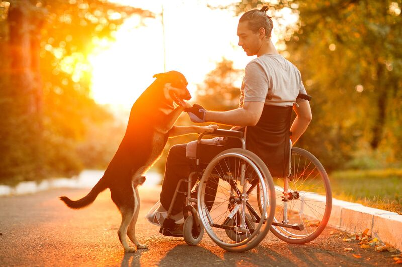 Sun shining on a man in wheelchair with his dog
