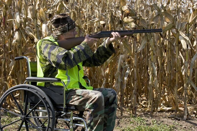 A man in a wheelchair bird hunting with a shotgun in a corn field.