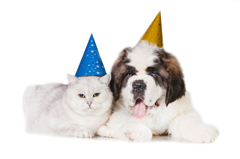 Dog and cat laying down wearing party hats.
